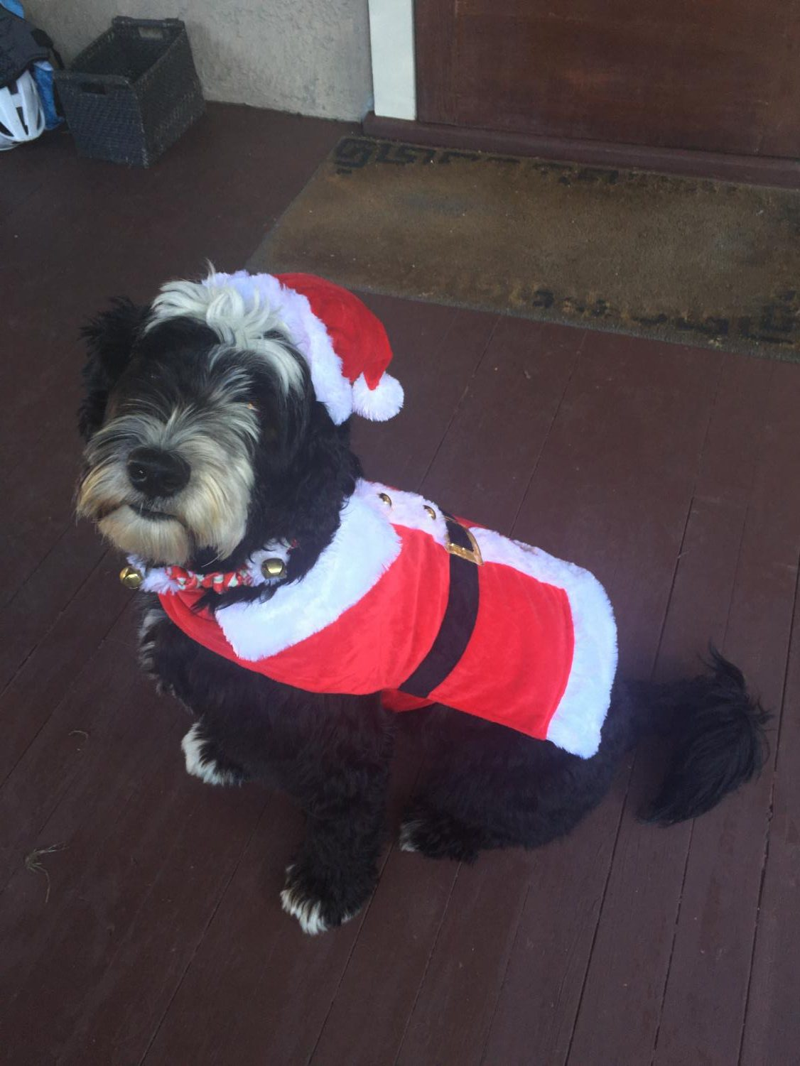 Dog%E2%80%99s+Name%3A+Ollie%0A%E2%80%9COllie%E2%80%99s+always+Santa+for+Christmas+but+he+loves+being+festive+all+year+around.%E2%80%9D%0A-+Maddie+Reynders+%2719