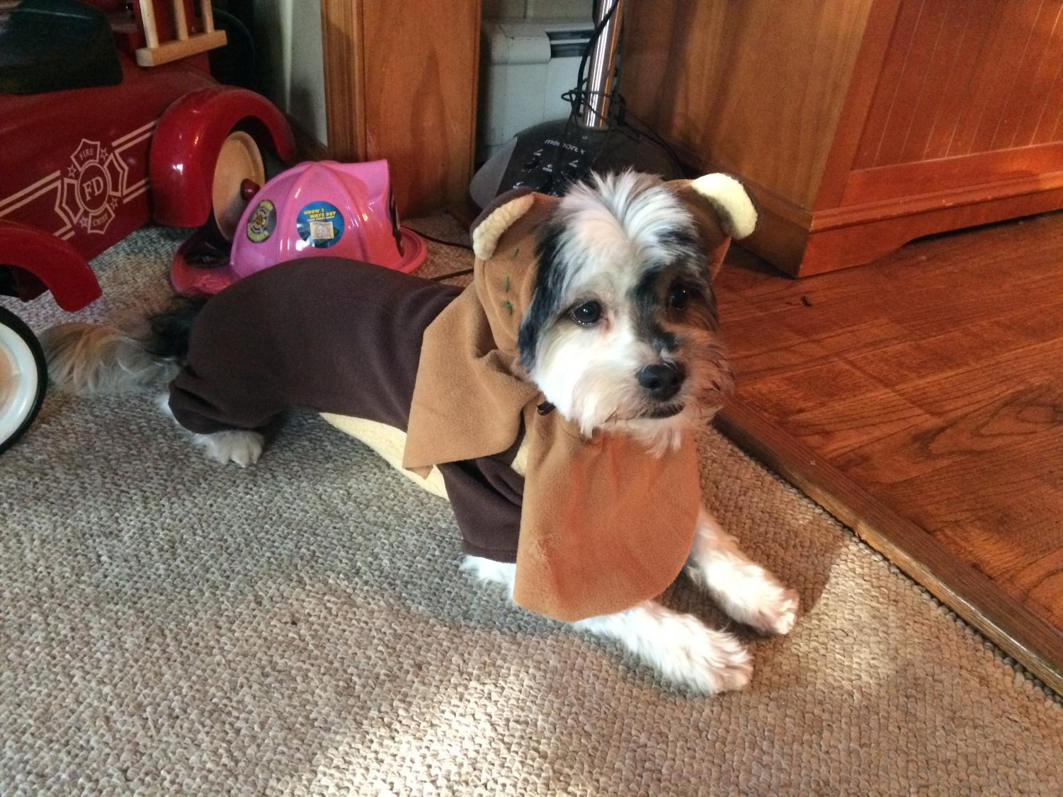 Dog%E2%80%99s+Name%3A+Parker%0A%E2%80%9CI+dressed+my+dog+as+an+ewok+two+years+ago+for+Halloween+because+the+rest+of+my+family+was+dressed+as+Star+Wars+characters.%E2%80%9D+%0A-+Ms.+Aimee+Burgoyne-Black%2C+English+Teacher