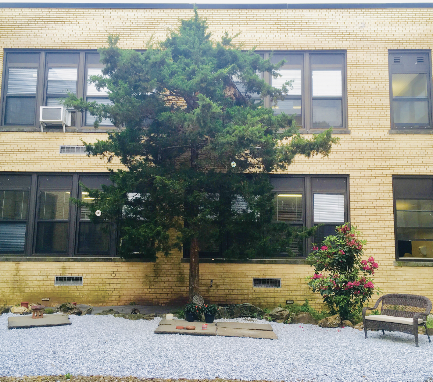 WHS' forgotten courtyard brought back to life again