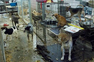 The St. Francois Society, a no-kill rescue in Missouri, lost its state license in 2011 for multiple health and welfare violations. Over 200 cats and dogs were taken from the unkempt property, many of whom were found roaming loose.