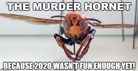 Murder hornets: What's the buzz?