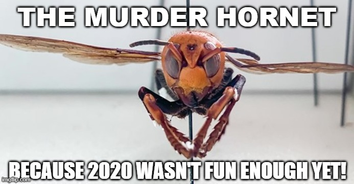 Murder+hornets%3A+What%E2%80%99s+the+buzz%3F